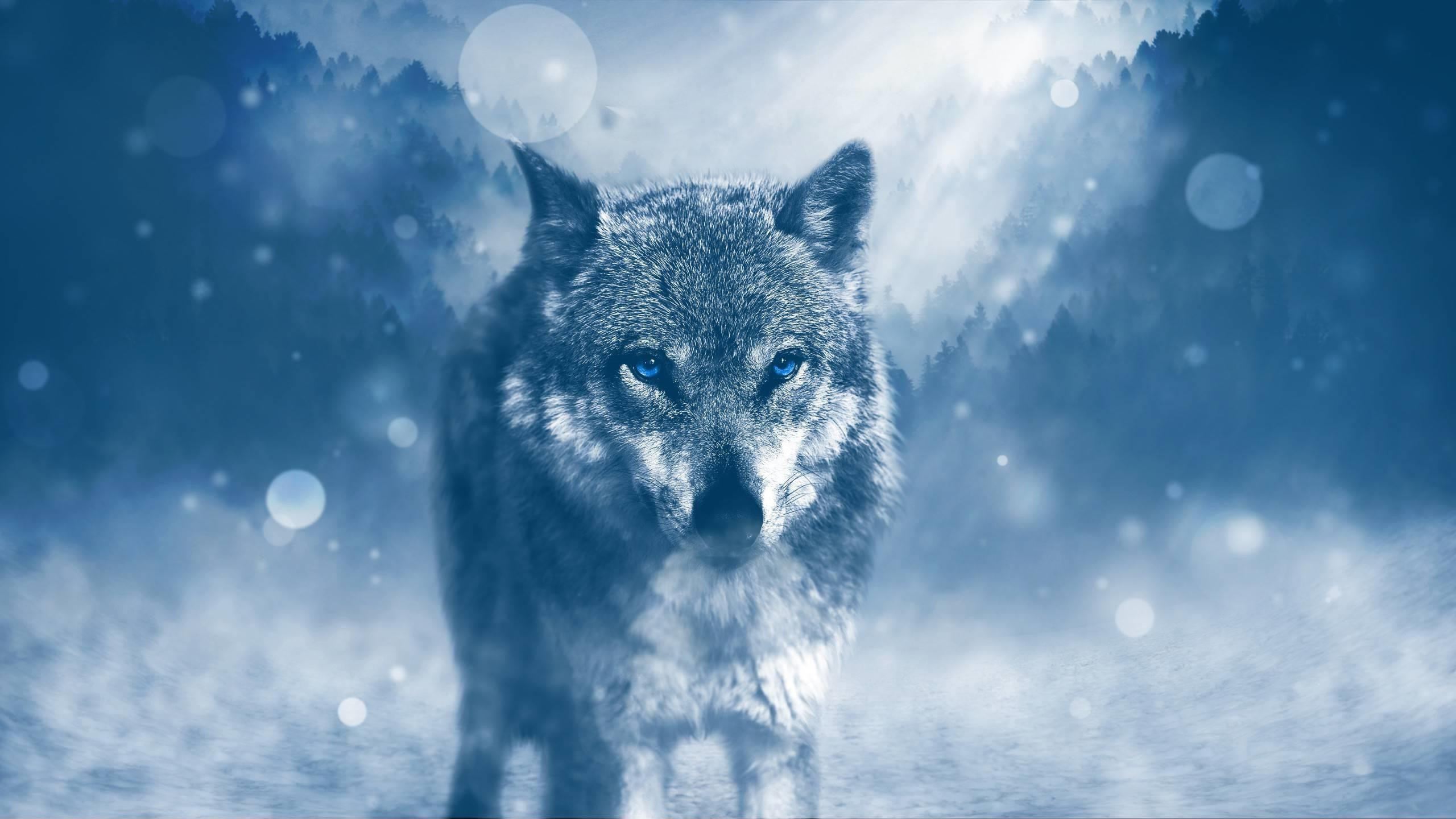 Wolf-Full-HD-Large-Wallpapers
